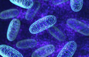 深部体温37℃ 酵素健康サプリミトコンドリア